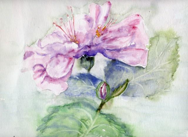 hibiscusdenadia640x480.jpg